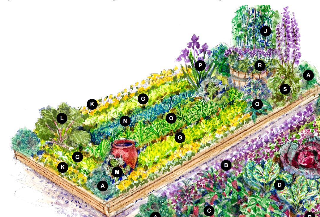Bhg vegetable garden plans garden design ideas for Best vegetable garden planner