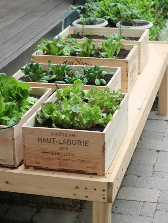 Build Indoor Vegetable Garden