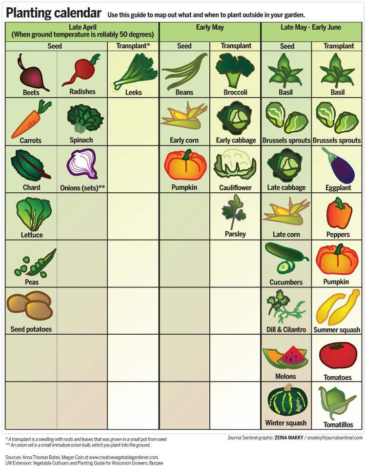 Calendar for Planting Vegetables in Garden
