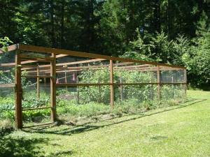 Chicken Wire Fence Garden