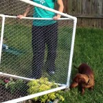 Chicken Wire Garden Fence Ideas