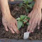 Container Gardening for Beginners Vegetables