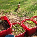 Container Gardening Tips Vegetables
