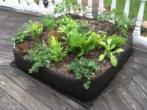Container Gardening Vegetable Seeds