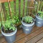 Container Gardening Vegetables for Beginners