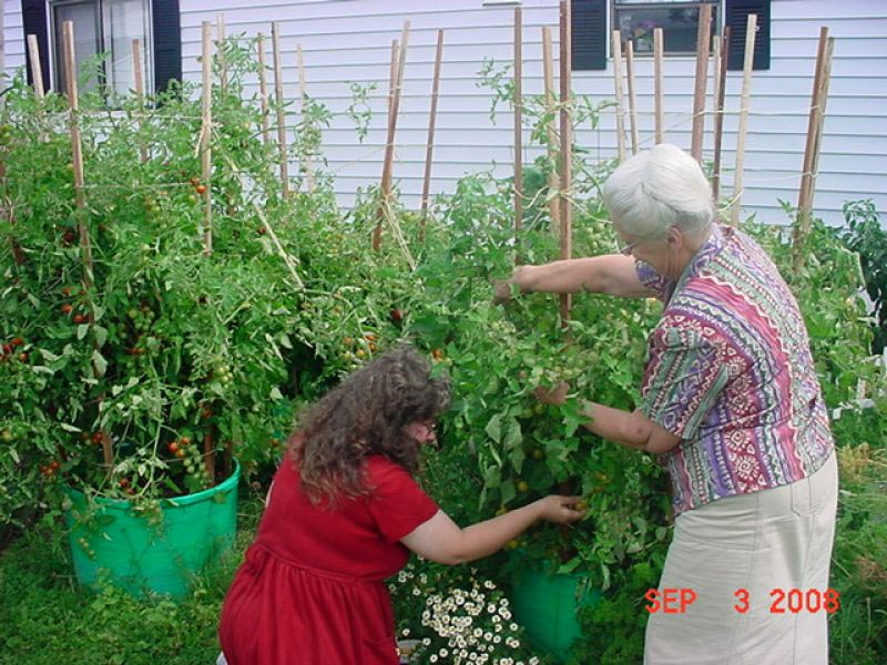 Container Vegetable Garden Designs