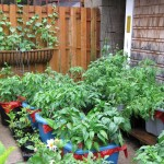 Container Vegetable Garden Planner