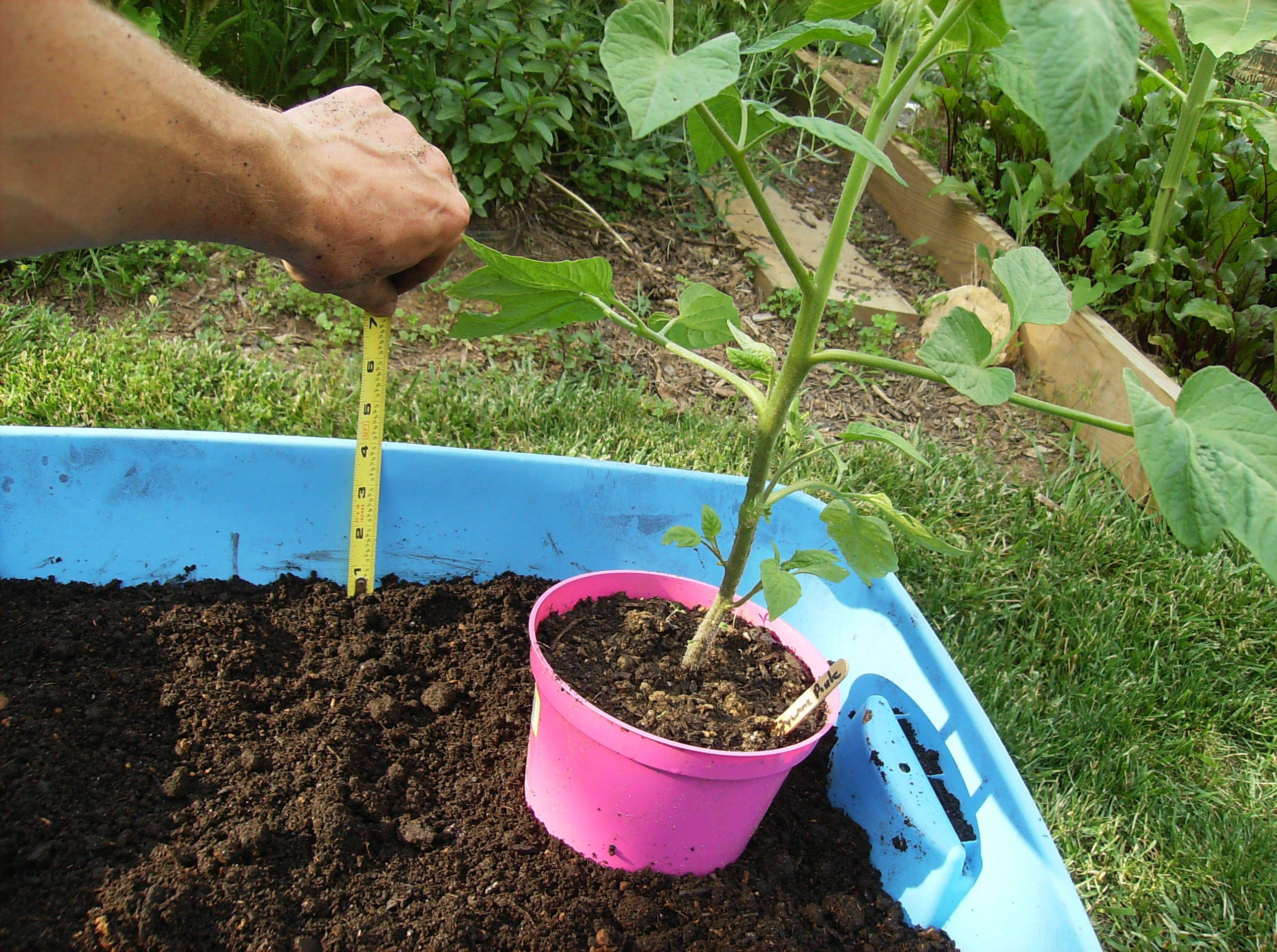 Container Vegetable Garden Soil