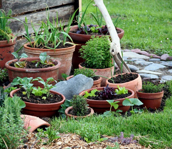 Container Vegetable Gardening for Dummies