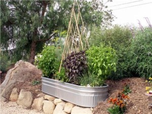 Container Vegetable Gardening Tips