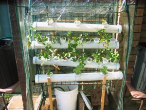 DIY Indoor Hydroponic Vegetable Garden