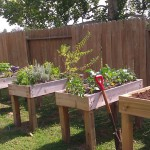 DIY Raised Vegetable Garden