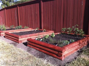 Starting A Raised Bed Organic Vegetable Garden Garden Design Ideas