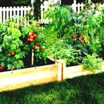 Easy Patio Vegetable Garden