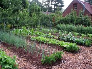 Easy Vegetable Garden Plan