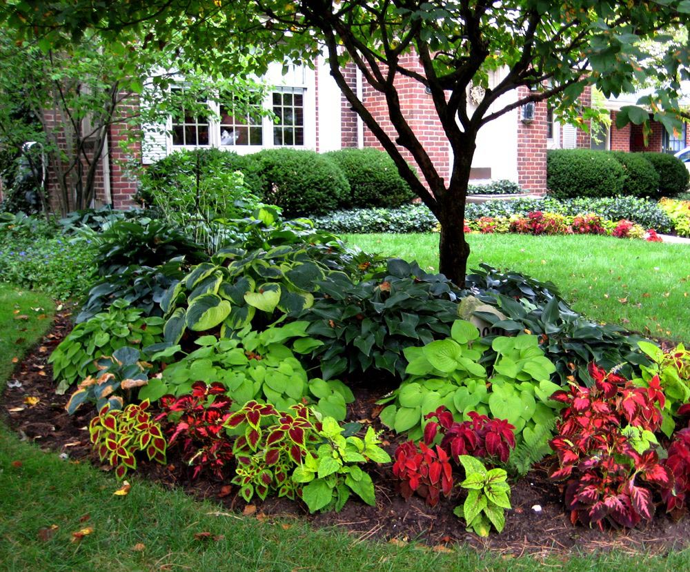 Flower Garden Ideas for Front Yard