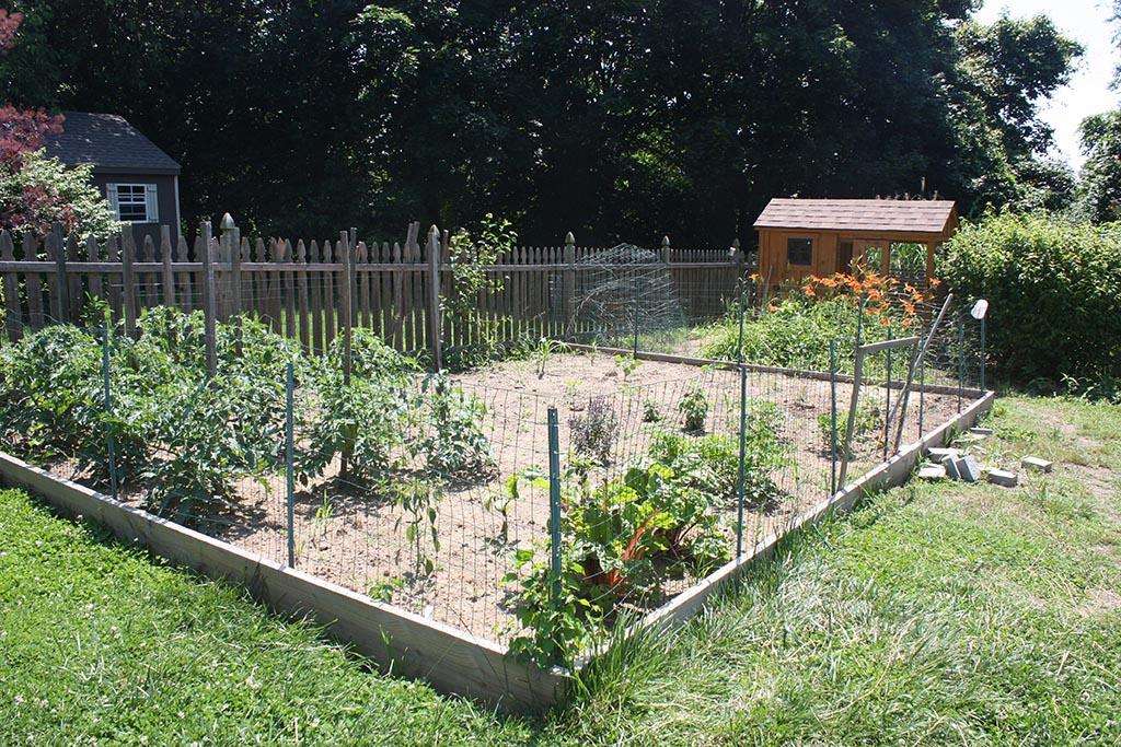Garden Fence with Chicken Wire