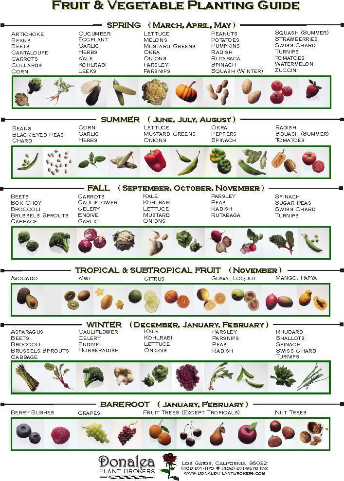 Garden Vegetables to Plant