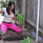 Gardening Tips for Vegetables