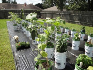 Growing a Patio Vegetable Garden