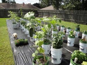Growing a Patio Vegetable Garden