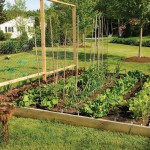 Growing a Raised Bed Vegetable Garden