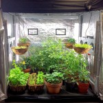 Growing an Indoor Vegetable Garden