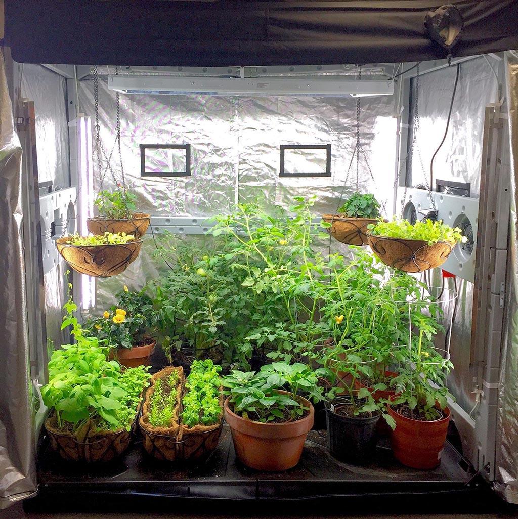 Growing an Indoor Vegetable Garden