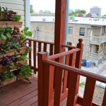 Growing Vegetables on Balcony Garden
