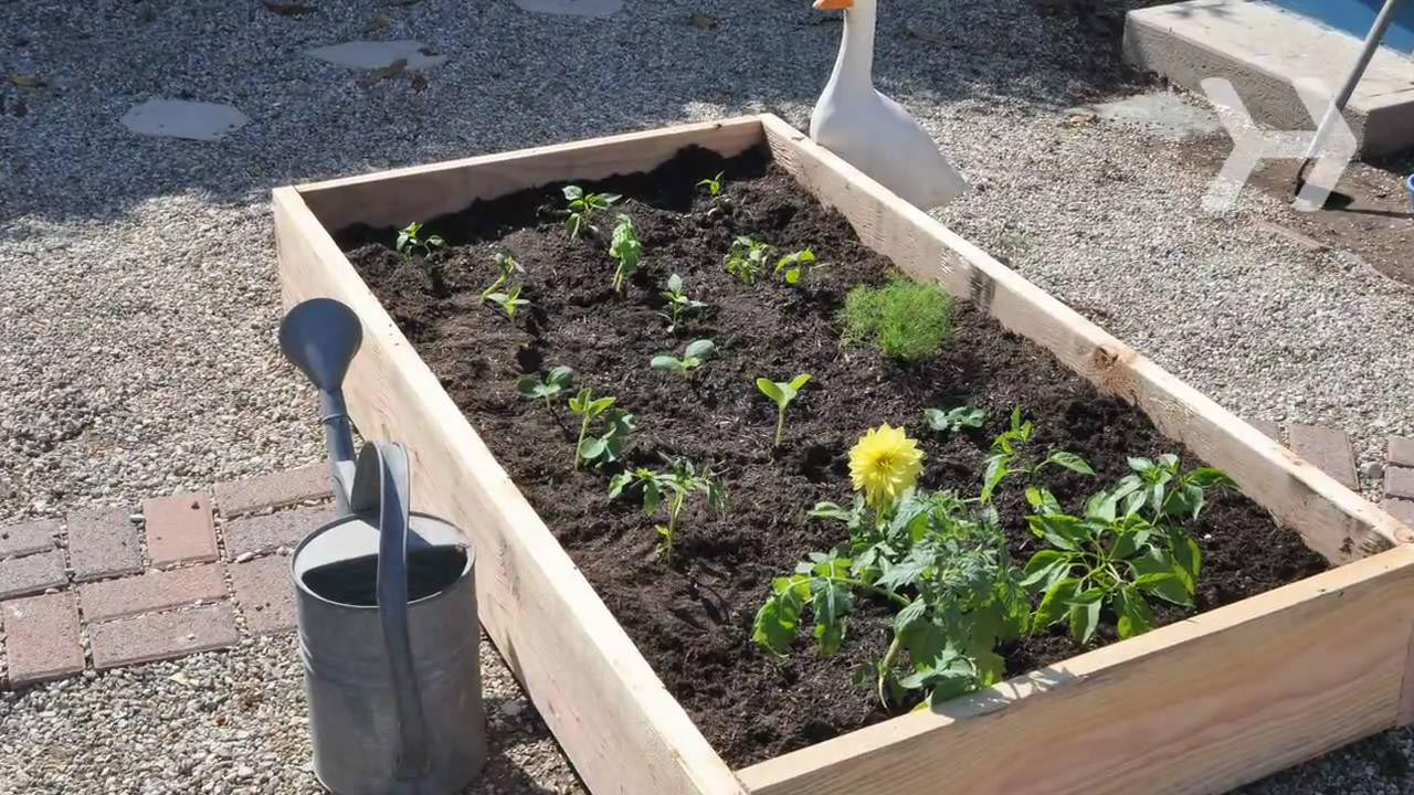 How Plant Vegetable Garden Garden Design Ideas