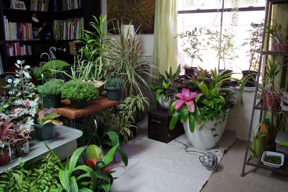 Indoor Apartment Vegetable Garden