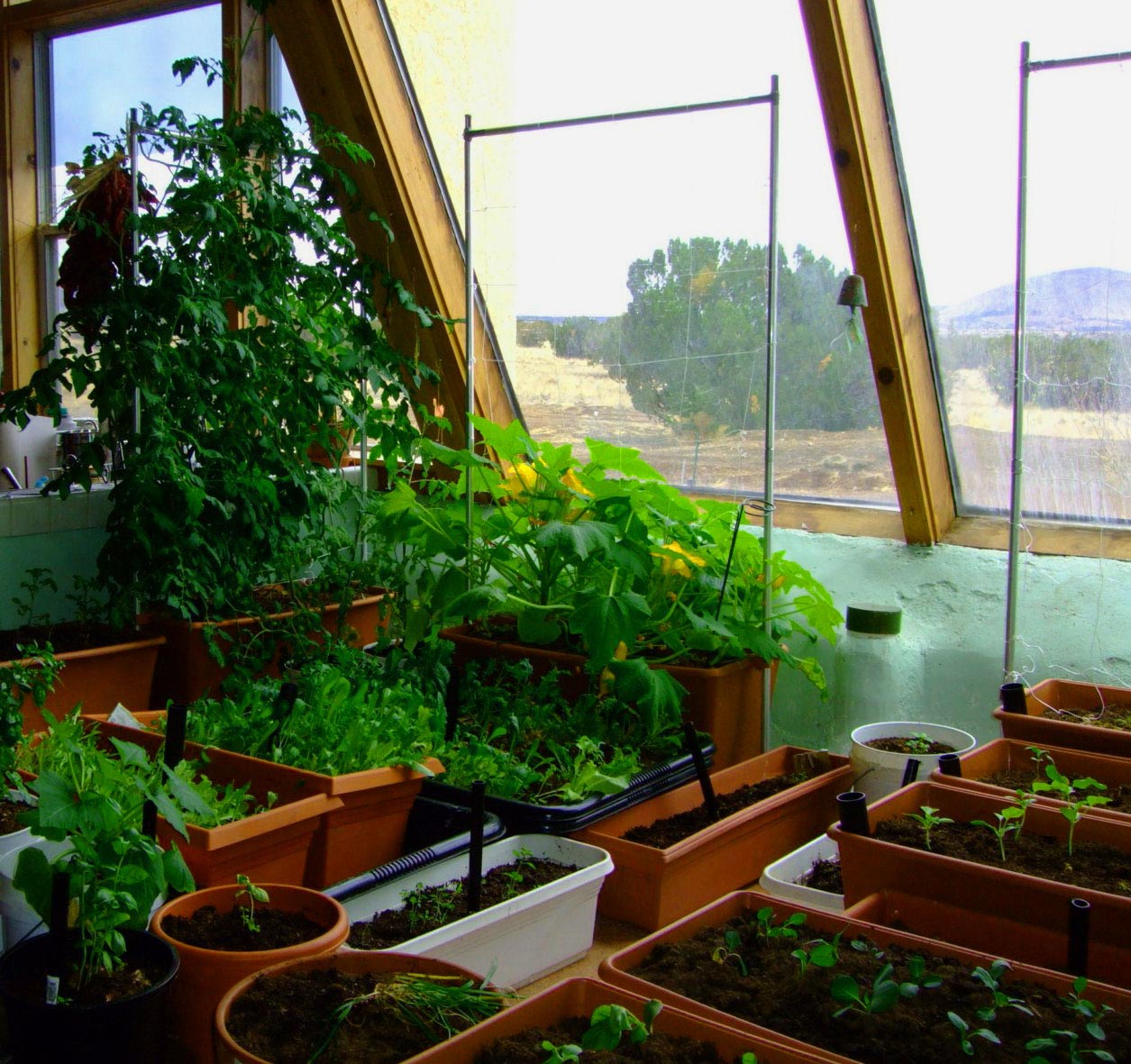 Indoor Container Vegetable Garden