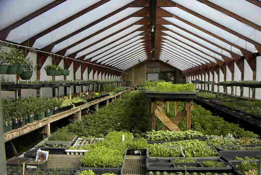 Indoor Fruit and Vegetable Garden