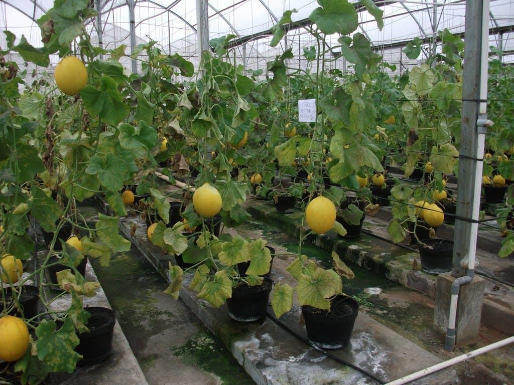 Indoor Gardening Vegetables and Fruits