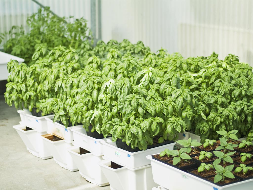 Indoor Vegetable Garden DIY