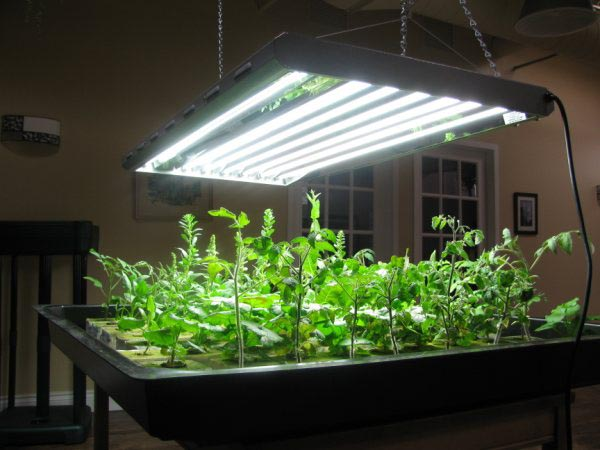 Indoor Vegetable Garden Setup