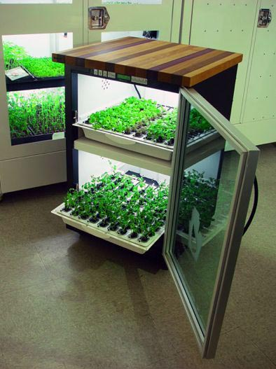 Indoor Vegetable Garden System