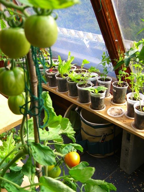 Indoor Vegetable Gardening Tips