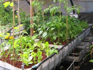 Indoor Winter Vegetable Gardening Ideas