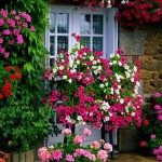 Low Maintenance Flowers for Garden