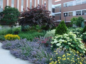 Low Maintenance Perennial Garden