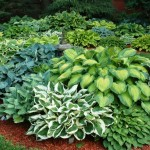 Low Maintenance Perennial Shade Garden