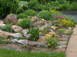 Low Maintenance Rock Garden Plants