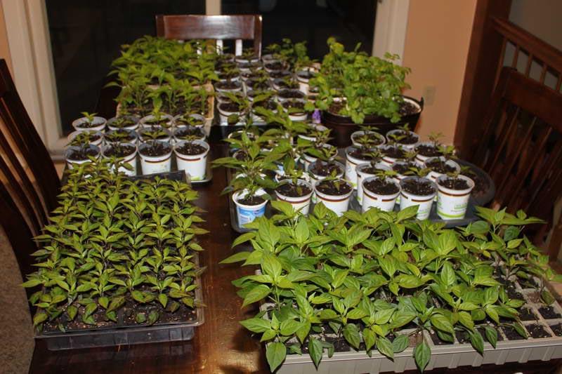 Make Indoor Vegetable Garden
