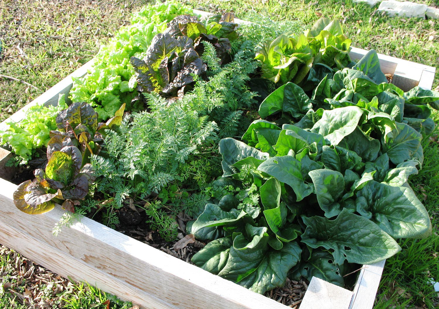 Most Popular Vegetable Garden Plants