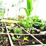 Organic Vegetable Container Gardening for Beginners
