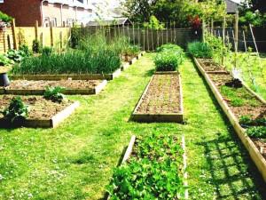 Organic Vegetable Garden Plans