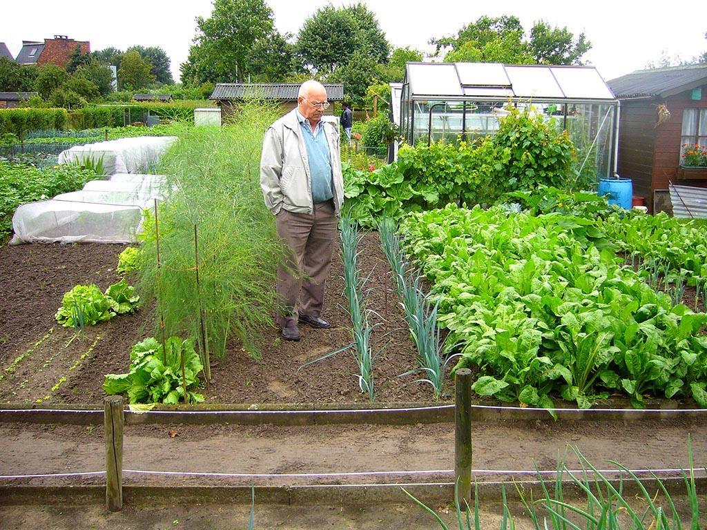 Organic Vegetable Gardening Tips