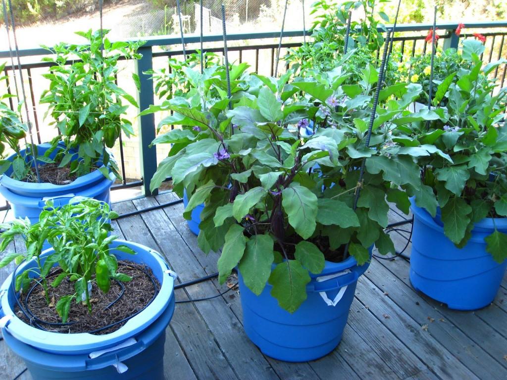 Patio Container Gardening Vegetables
