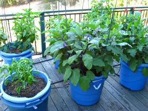 Patio Container Gardening Vegetables